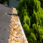 Gutter Guard Secrets You Should Know