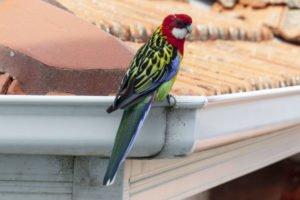 birds on gutters for summer gutter guards
