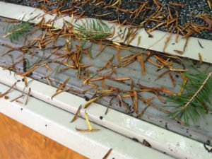 brush off spring gutter guard 5