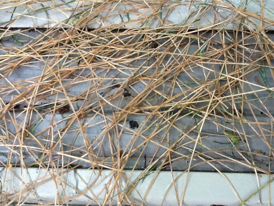 Gutter Guards for Pine Needles